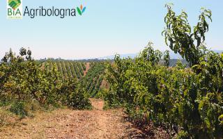Nasce un nuovo polo del Biologico tra Bologna e Bagheria