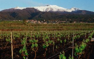 Etna & Wine Murgo Experience