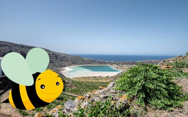Vi presentiamo l'Ape di Pantelleria!