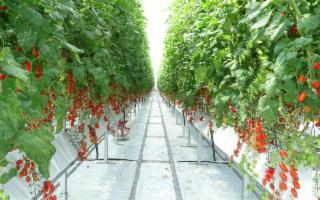 A Enna si sperimenta l'agricoltura idroponica per riqualificare il centro storico