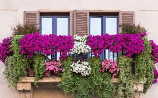 Volete un balcone fiorito? È il momento dei bulbi di Primavera!