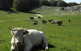 Un bando per il rilancio del marchio locale ''Carni Madonite''