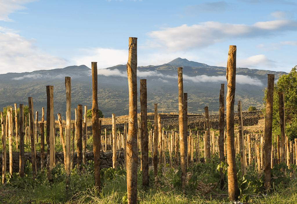 """Arte e Vino. Cantina Cottanera dà il via ad un progetto fatto di """"Visioni""""..."""