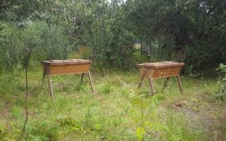 Il 23 maggio viene presentato alla comunità l'alveare di Terra Franca