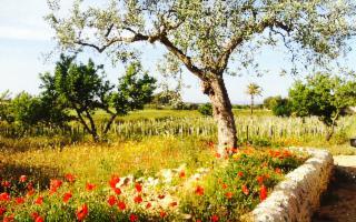 Una vacanza nella campagna ragusana, ospiti della natura