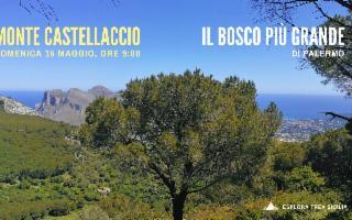 Monte Castellaccio, il bosco più grande di Palermo