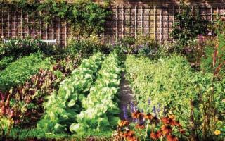 Geraci Siculo ha indetto un concorso per il miglior orto familiare
