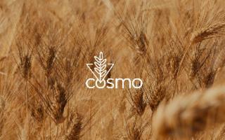Il ritorno in Sicilia del grano monococco, il primo grano coltivato dall'uomo