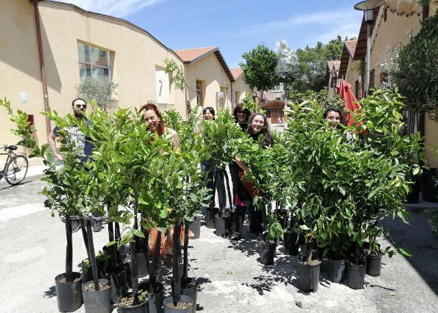 100 alberi per i Cantieri Culturali alla Zisa