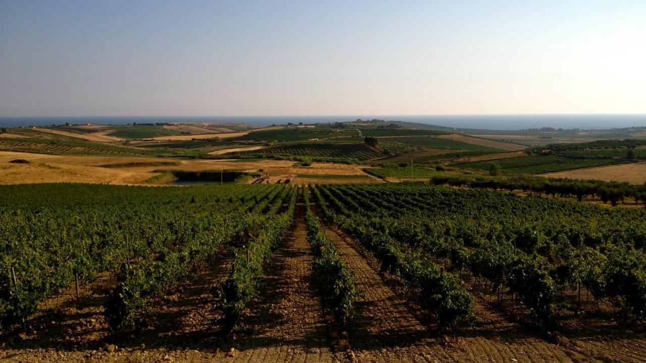 La Sicilia che non ti aspetti... Mandrarossa inaugura la sua nuova Winery