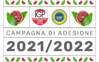 Al via la campagna di adesione 2021/2022 al Consorzio Arancia Rossa di Sicilia IGP