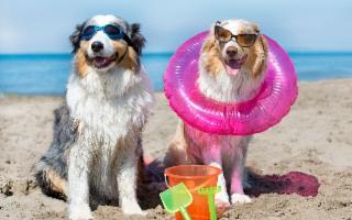 Per una vacanza ''bestiale'' in Sicilia: in viaggio con il vostro cane o il vostro gatto