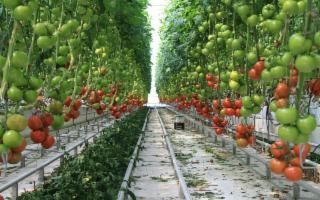 In Sicilia si prepara l'agricoltura del futuro