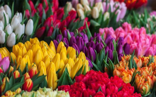 Se son fiori… Torna a settembre il ''BonuSicilia - Fiorai''