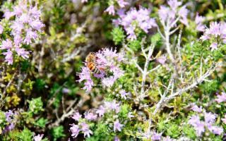 L'antico miele degli Iblei è diventato Presidio Slow Food