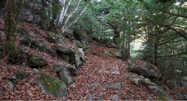 nel-cuore-dei-nebrodi-nel-bosco-della-tassita