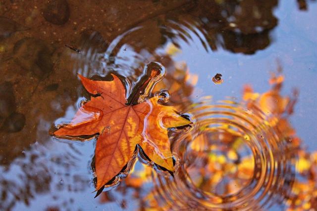 Come affrontare felicemente l'autunno con l'aiuto delle piante